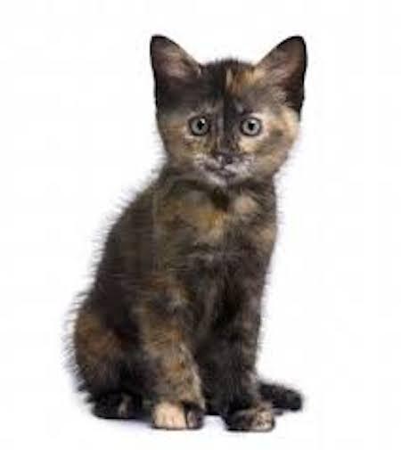 short story animal cat kitty